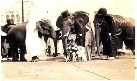 elephant-wedding